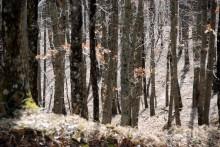 Parco delle Foreste Casentinesi